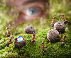 human spying ants hide treasure, ant tales