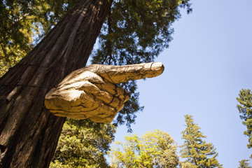 Tree branch carved into pointing hand