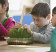 Boy measuring plant in classroom