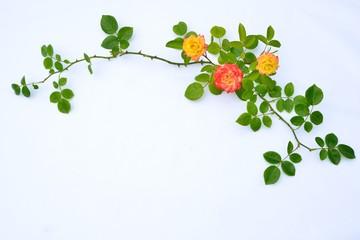 バラと枝のフラワーアレンジ A