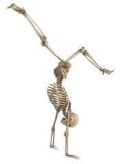 skeleton thinking pirueta.jpg