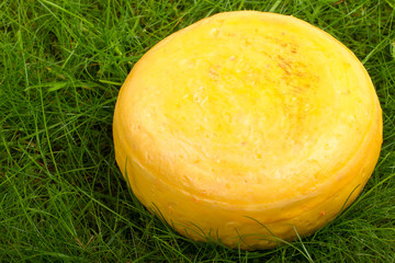 Round onion cheese isolated in the green grass