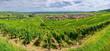 Panorama sur le vignoble d' Ammerschwihr , Alsace (Fr).