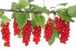 Branch with red currants, Johannisbeeren