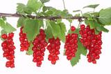 Branch with red currants, Johannisbeeren
