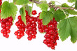 Rote Johannisbeeren, red currants