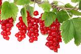 Rote Johannisbeeren, red currants