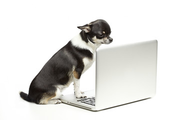 Dog with Laptop