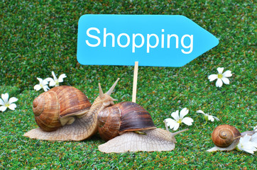 Three snails rushing to the shopping