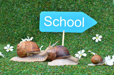 Three snails rushing to school