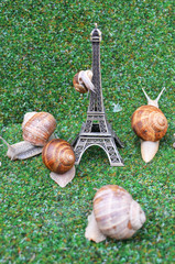 Snails at the Eiffel tower