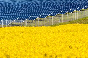 Solarmodule in einem Rapsfeld
