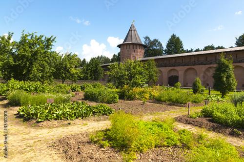 Аптекарский огород в монастыре на фоне крепостных стен и башен