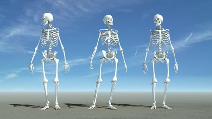 Three skeletons waiting for something.