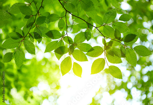Foto Spatwand Bomen Green leaves background