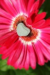 Blüte mit Herz