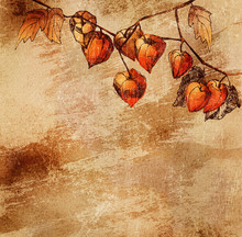 Grunge  with a sketch of orange physalis