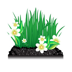 garden grass with blossoming flowers and ground