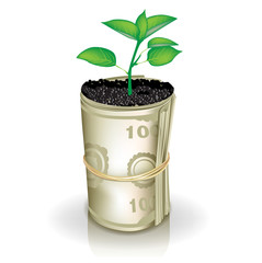 roll of money and growing plant