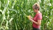 Agronomist inspecting corn quality in field