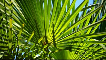Green Palm Leaf in the wind