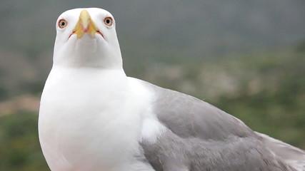 sea gull 02