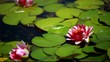 A single purple water lily flower floating in a lily pond