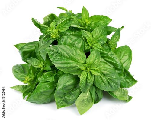 Fresh basil leaves - 43422086