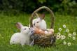 Пасха. Кролики с корзиной яиц.
