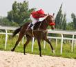 Horse racing in Pyatigorsk