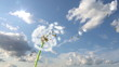 Dandelion, 3d animation against sky background
