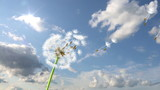 Dandelion, 3d animation against sky background