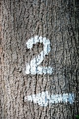 Gemalte Zwei und Pfeil auf einer Baumrinde