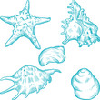 Sea shells and star. Hand drawn illustration in vintage style.