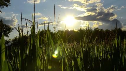 backlight in the fields