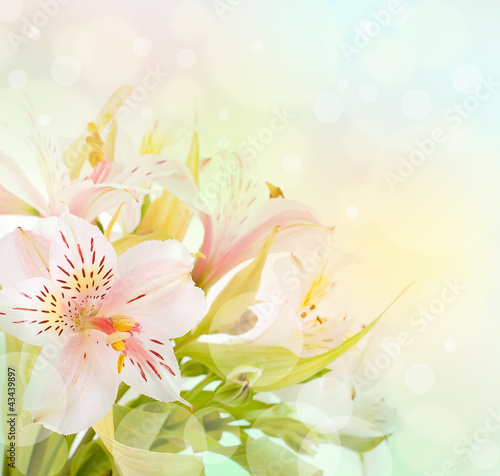 Beautiful flower is  in the rays of light, blured and colored