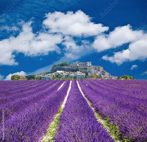 Lavande en Provence, village provençal en France - 43445005