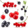 Collection of red currant and bilberry isolated on white