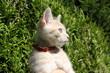 Chaton joue dans l herbe dehors extérieur adorable