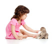 little kid playing with Scottish fold kitten