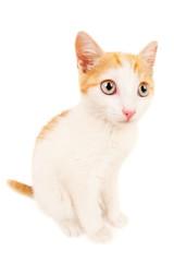 Funny redhead kitty
