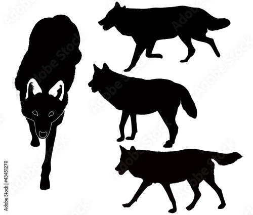 wolves animals vector isolated on white background