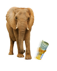 Elephant kicking prescription bottle with pills and dollars