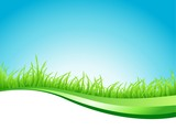 green grass and line background