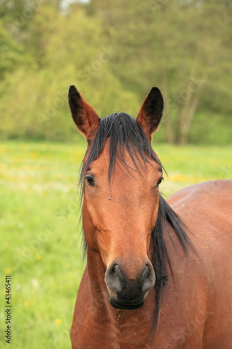 head and neck of a horse brown