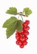 Red currants, rote Johannisbeeren, freigestellt