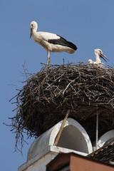 Burgenland Storch