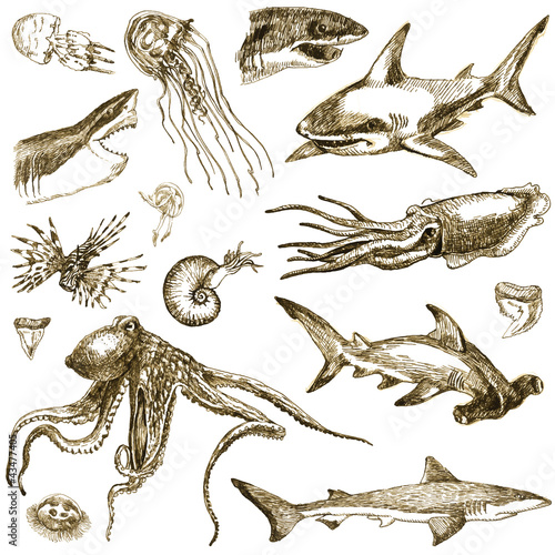Hand-drawn collection. Marine life - SEA MONSTERS and Sharks.