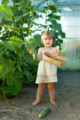 child picking cucumbers in hothouse