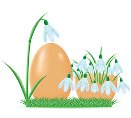 snowdrops are in egg shell  illustration